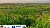 5 Day Alentejo Region Tour from Evora, Alentejo, Multi-day Tours