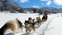 Pagosa Springs Dogsled Adventure, Pagosa Springs, Ski & Snow