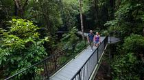 4-Day Cairns and the Great Barrier Reef Including Green Island and the Daintree Rainforest, Cairns ...