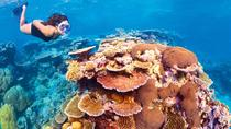 6-Day Best of Cairns Including the Great Barrier Reef, Kuranda and the Daintree Rainforest, Cairns...