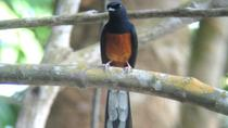 Afternoon Birdwatching Tour in Langkawi, Langkawi, Nature & Wildlife