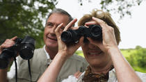 Full-Day Bird Watching Tour, Nassau, Nature & Wildlife