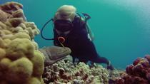 Certified Diving Tour: Waikiki South Shore Shallow Boat Dive, Oahu, Scuba & Snorkelling
