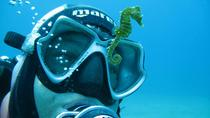 Scuba Diving from Split Trogir Omis or Makarska, Split, Scuba & Snorkelling