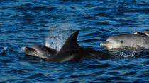 Dolphin Watching Tour from Lisbon, Lisbon, Dolphin & Whale Watching