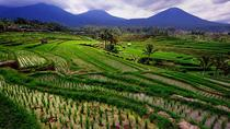 Private Full-Day Bedugul Village and Jatiluwih Rice Fields Tour from Bali, Bali, Day Trips