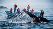 Baja Whale Watching Overnight Adventure in Magdalena Bay, Todos Santos, Overnight Tours