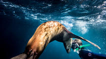 Swimming and Snorkeling with Sea Lions in the Sea of Cortez, Todos Santos, Snorkeling