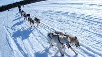 Yellowknife Dog Sledding Tour, Yellowknife, Ski & Snow