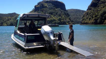 Discover Whangaroa Harbour Boat Tour , North Island, Day Cruises