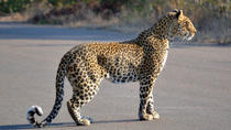 4-Day Kruger National Park Safari from Johannesburg, Johannesburg, Multi-day Tours