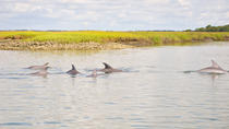 2 Hour Dolphin Boat Tour, Charleston