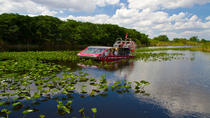 Everglades Airboat and Alligator Tour from Miami or Fort Lauderdale Port or Airport, Miami, Airboat ...