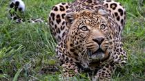 Private Tour: Wild Life Safari from Cape Town, Cape Town