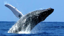 Whale Watch Cruise by Zodiac from Kauai, Kauai, Dolphin & Whale Watching
