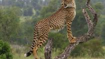 7-Day Private Tour of Kruger National Park, Kruger National Park, Multi-day Tours