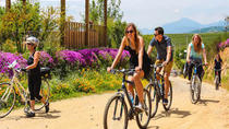 Bike and Wine Tour at Casablanca Wine Valley, Valparaíso, Bike & Mountain Bike Tours