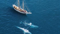 Whale and Puffin Watching on Board a Traditional Oak Sailing Ship from Husavik, North Iceland, ...