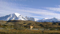 Torres del Paine Day Trip from Puerto Natales, Puerto Natales, Day Trips