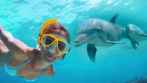 Dolphin Encounter and Snorkeling Combo at Shell Island, Panama City Beach, Scuba & Snorkelling