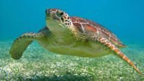 Turtles, Snorkeling and Cenotes Adventure in Akumal , Cancun, Snorkeling