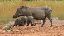 Pilanesberg Safari Day Trip from Johannesburg or Pretoria , Johannesburg, Day Trips