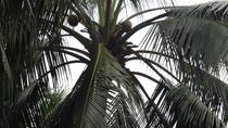 Kuala Lumpur Shore Excursion Mah Meri Sea Gypsies Cultural Village with Coconut Wine and Lunch, ...