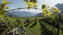 Amarone Wine Tour, Verona, Wine Tasting & Winery Tours