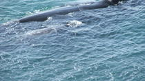 Private Tour: Whale Watching Day Tour to Hermanus from Cape Town , Cape Town, Dolphin & Whale ...