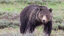Half-Day Wildlife Safari From Jackson Hole, Jackson Hole, Half-day Tours