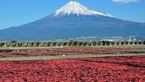 Mt Fuji Private One-Day Tour by Chartered Vehicle from Tokyo, Tokyo, Private Tours