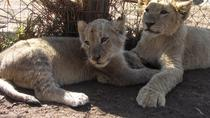Lion Park Tour from Sandton, Johannesburg, Half-day Tours