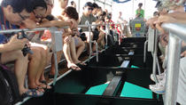 Glass Bottom Boat Tour from Hurghada, Hurghada, Glass Bottom Boat Tours