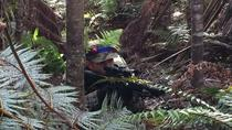 Hawaii Laser Tag Park, Big Island of Hawaii, Half-day Tours