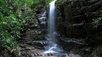 Tijuca Forest Hiking Tour Including Waterfalls, Rio de Janeiro, Nature & Wildlife