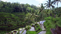 Private Tour: Ubud Sightseeing Tour, Ubud, Private Sightseeing Tours