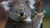 Yarra Valley Wine and Wildlife Day Trip from Melbourne Including Healesville Sanctuary, Melbourne, ...
