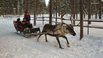 Lapland Reindeer Safari From Saariselkä, Lapland, Safaris