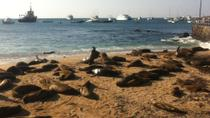 6-Day Galapagos Islands Adventure: Diving, Hiking and Snorkeling, Galapagos Islands, Multi-day Tours