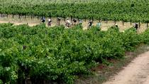 Cape Winelands Bike Tour and Wine Tasting from Cape Town, Cape Town, Bike & Mountain Bike Tours
