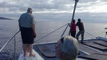 Dolphin and Whale Watching in a Luxurious Catamaran, Funchal