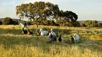 Monte Velho Lusitano Horse Stud Farm Private Day Trip from Lisbon, Lisbon, Private Tours