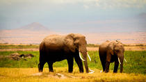 3-Day Amboseli Safari with Lake Nakuru on request, Nairobi, null