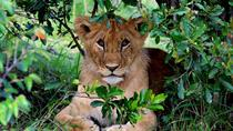 3-Day Masai Mara with Lake Nakuru on request , Nairobi, Multi-day Tours