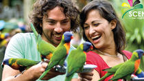 Currumbin Wildlife Sanctuary and Tropical Fruit World Day Trip from Gold Coast, Gold Coast, Day ...