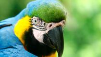 4-Day Jungle of Peru Tambopata Nature Reserve, Lima, Multi-day Tours