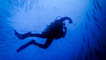 Scuba Diving Day Trip to Coiba National Park for Certified Divers, Santa Catalina, Scuba & ...