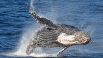 Whale Watching Experience with Live Commentary , Los Angeles, Dolphin & Whale Watching
