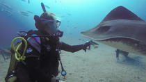 PADI Fish Identification Specialty Course in Tenerife, Tenerife, Snorkeling