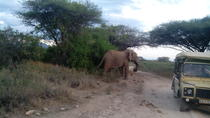 12 days Kenya and Tanzania Safari from Nairobi, Nairobi, Multi-day Tours